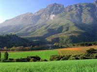 Vinhedos de Stellenbosch