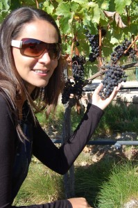 Hall Wines Napa Valley