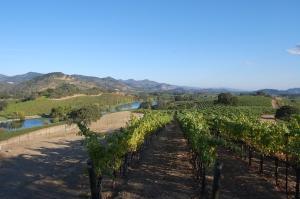 vinícola-quintessa-vinhos-boutique
