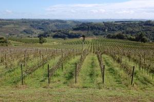 vinhedos vinícola Geisse