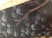 uva-passificada-vinicola-speri