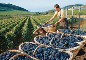 vinhos-da-frança-borgonha