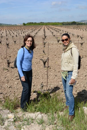 Vega-Sicilia-viñedos-vinhos