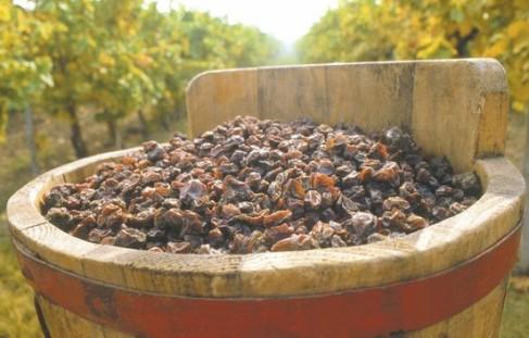 puttonyos-tokay-aszú-vinhos-hungria