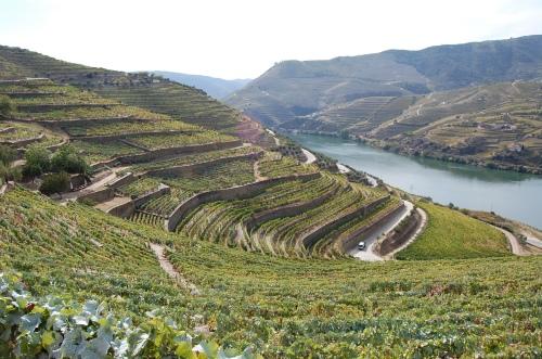 vinhedos-douro-portugal