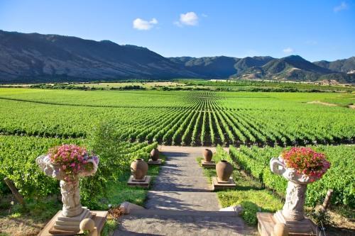 Santa-Rita-bodega-Colchagua-Chile