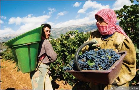 lebanon-wines-vinhos