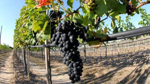 rota-da-uva-e-do-vinho-vale-são-francisco