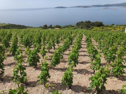 wineries-croatia-vinhos-croácia