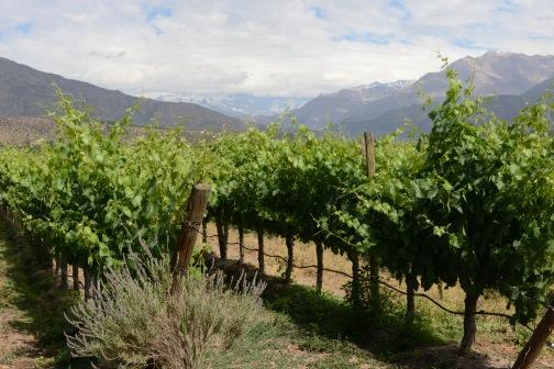 san-esteban-aconcagua-chile-vinos