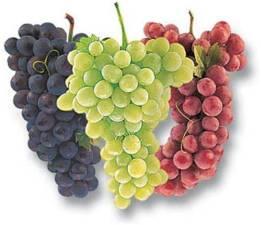 4_cor_do_vinho_degustação