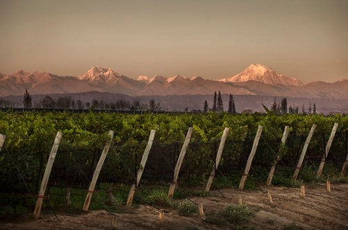 BODEGAS-NORTON-VIÑEDOS-VINEYARDS-ARGENTINA