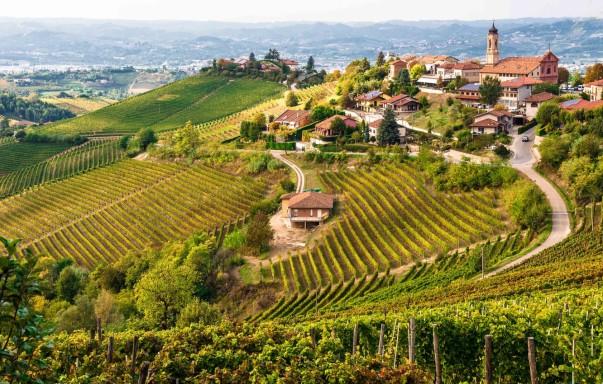 barbaresco-nebbiolo-piemonte-italy-denominazione-di-origine